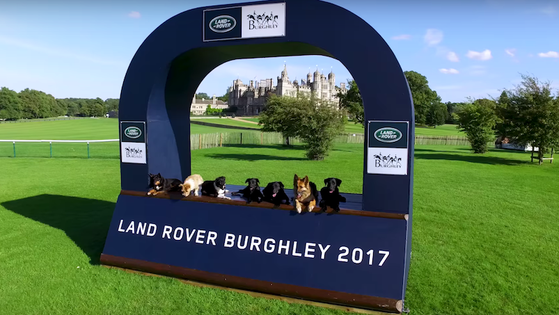 psy na Land Rover Burghley Horse Trials