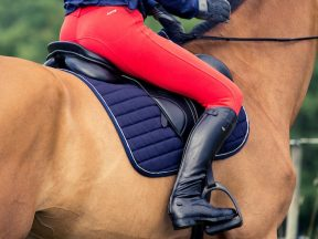 horse product of the year 2016