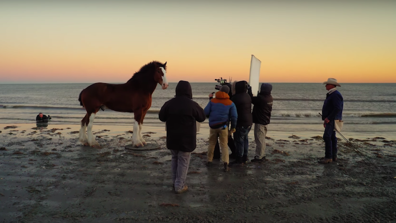 Kulisy reklam z Clydesdales