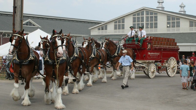 World Clydesdale Show 2022