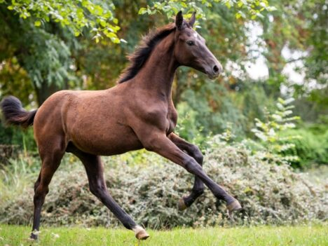 Fly High Sporthorses Auction 2020